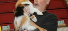 Guardian Angels will be at the Cats on the Beach Cat Show!